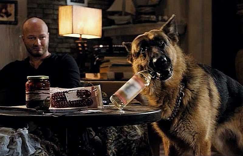 Watch the movie Dog 5 new season 2019 online for free in good quality hd 720